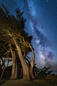 Stengel Cypress & Milky Way, Sea Ranch, California