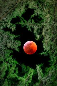 Super Wolf Blood Moon, Sea Ranch, California