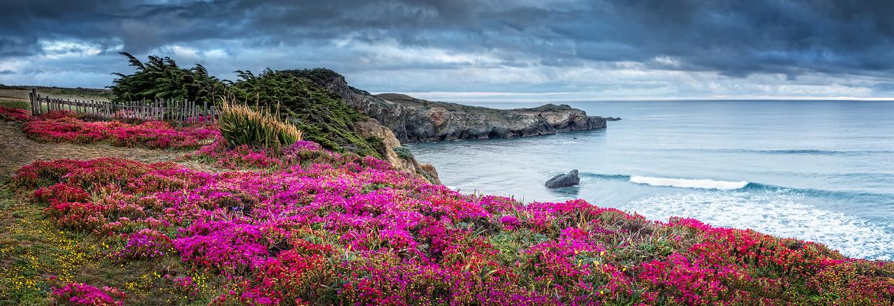 Black Point & Spring Bloom, Sea Ranch, California