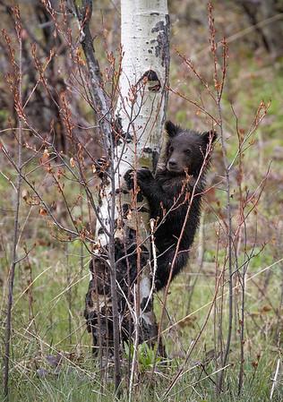 Bridger-Teton National Forest | Wyoming