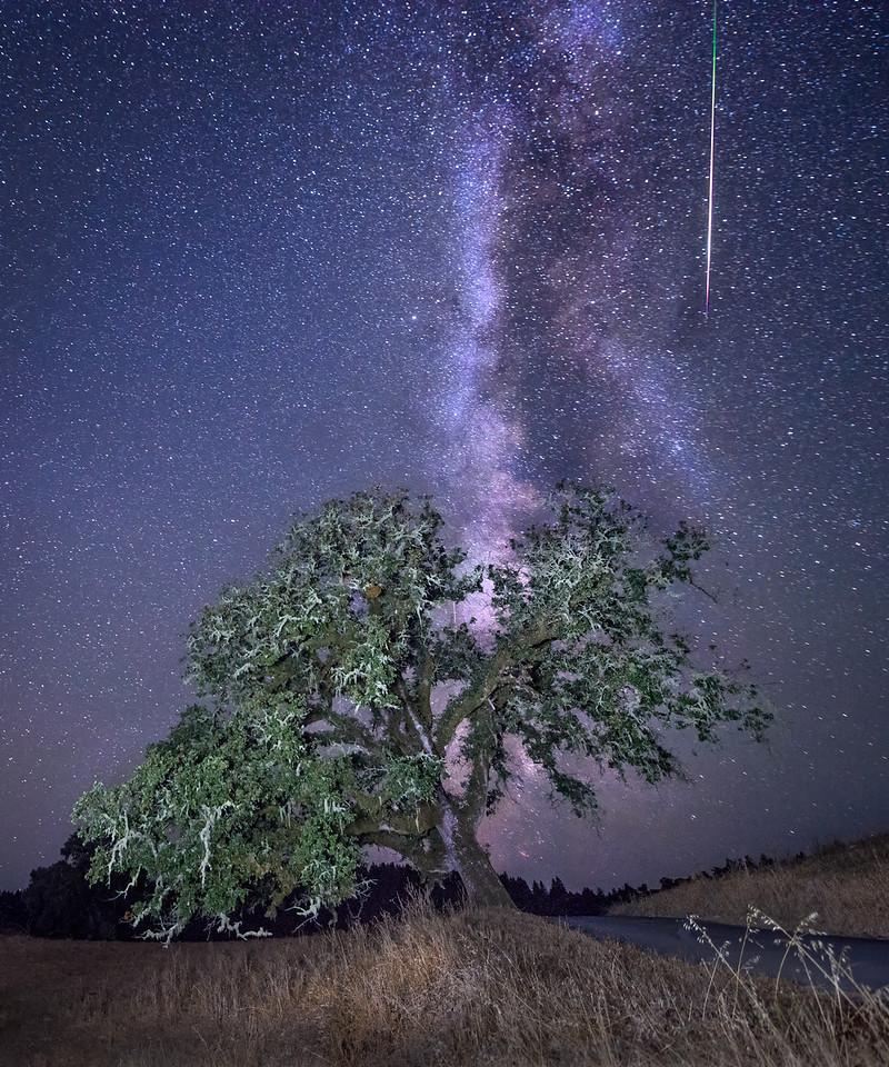 Perseid Meteor, Sonoma County, California