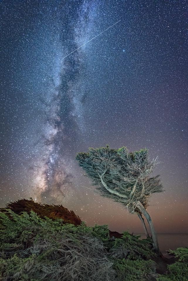 Wishing Cypress, Sea Ranch, California