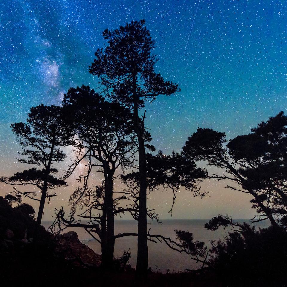 Fisk Mill Cypress & Shooting Star, Sonoma Coast, California