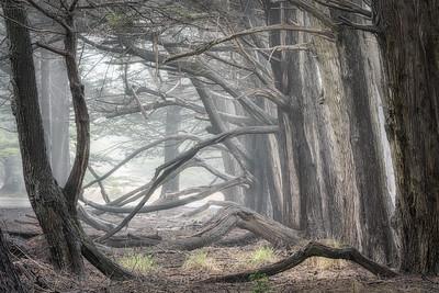 Foremast Cypress, Sea Ranch, CA