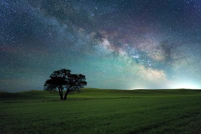Milky Way Over the Palouse Tree
