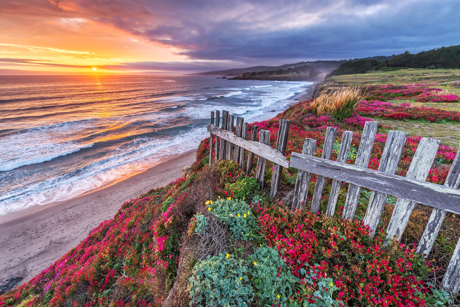 Black Point Flowers, Sea Ranch, California