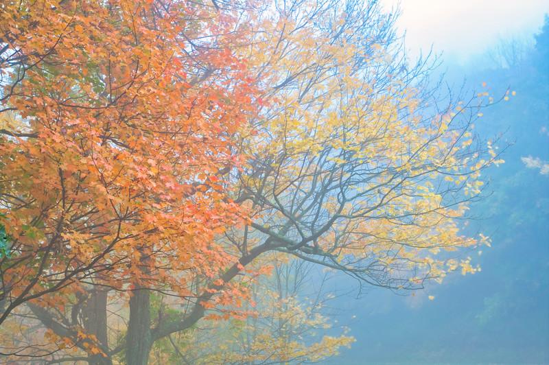 Blue Ridge Mountains Fall Color