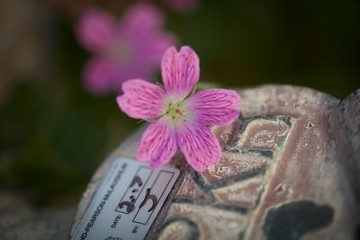 Flowers_O9A0605