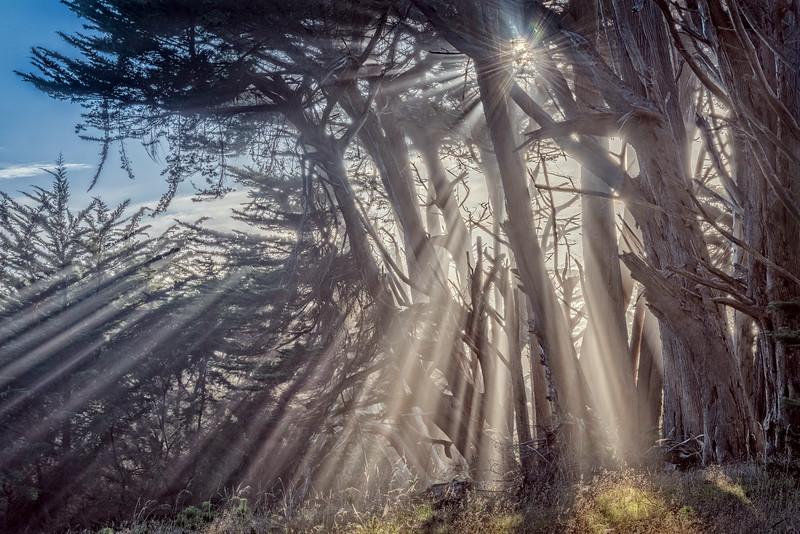 Sunlight Cypress, Sea Ranch, California