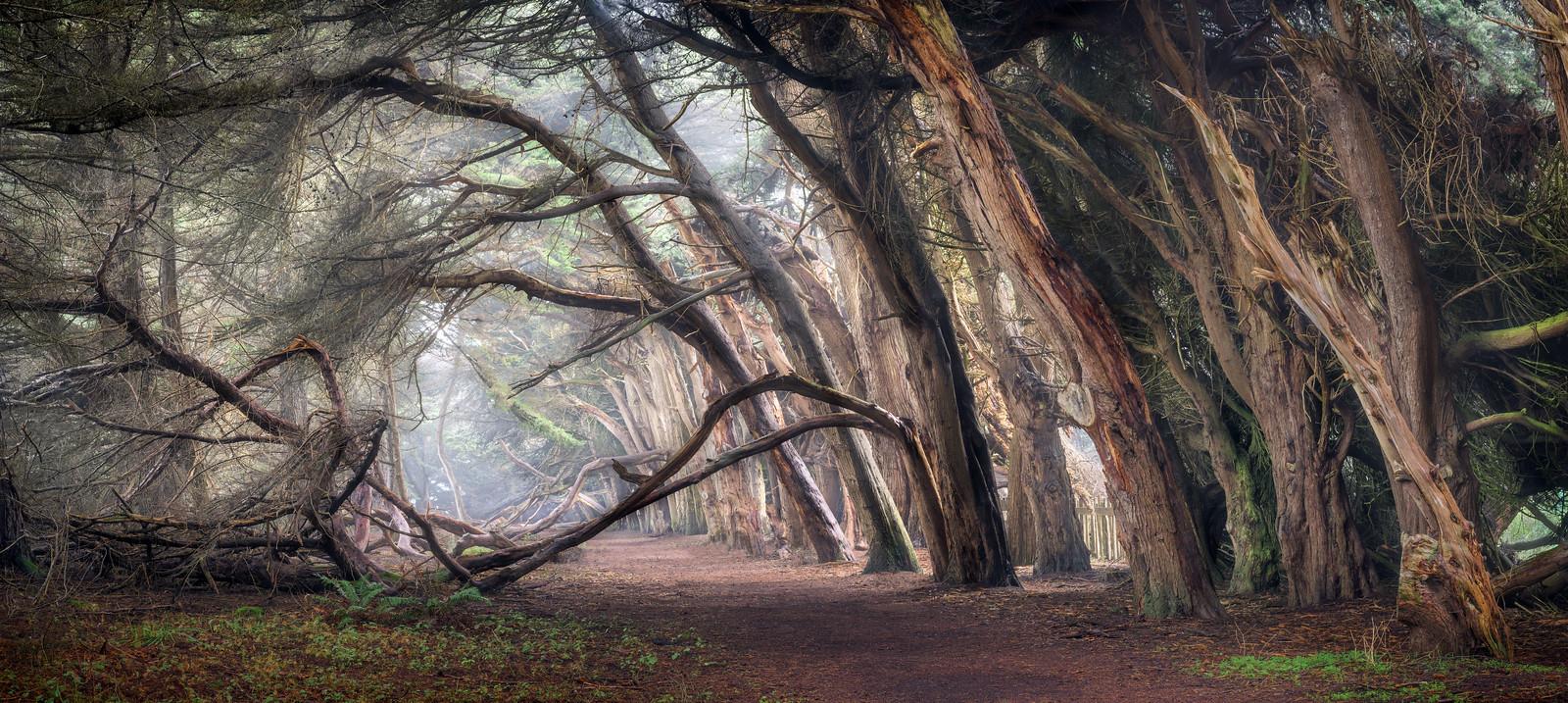 Pathway to Shell Beach, Sea Ranch, California