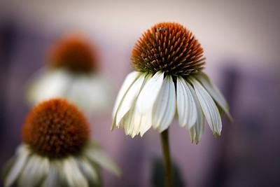Flowers_O9A3037