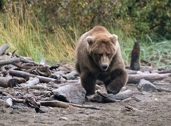 Naknek Lake Beach | Katmai National Park | Alaska