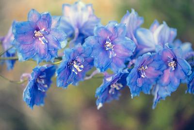 Flowers_O9A0665