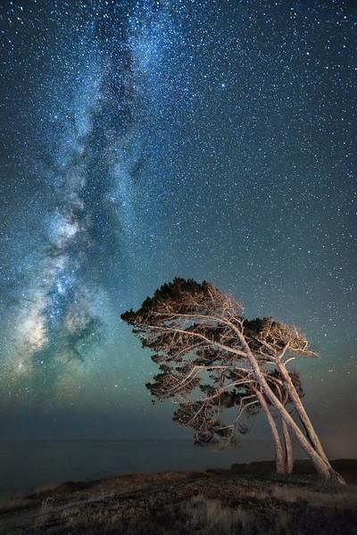 Stellar Wind, Study #1, Sea Ranch, California