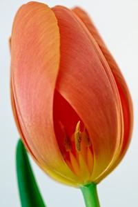 Flower_O9A6162