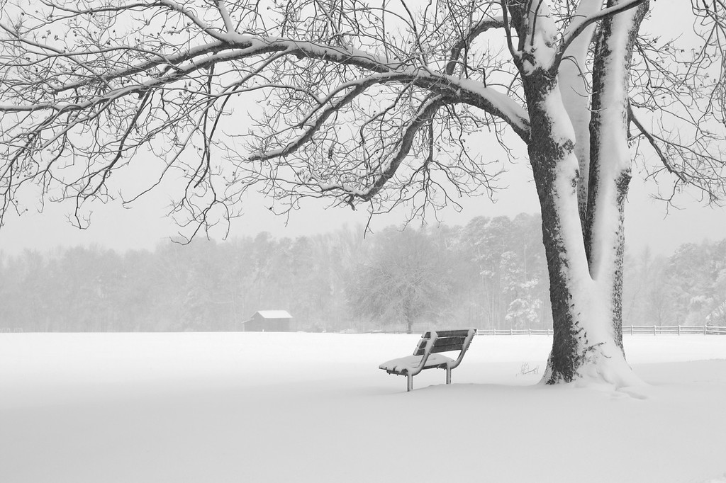 Benson Park Snow Storm