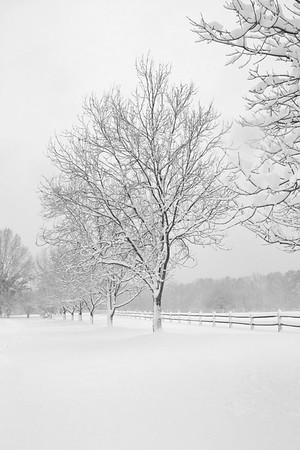 Benson Park Snow