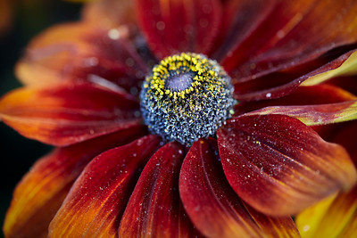 Flowers_O9A3020