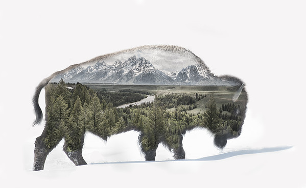 Bison Art - I decided to turn this Bison's profile image into some western type photo art :)    The image of the Snake River near Jackson Hole was taken a few summers ago