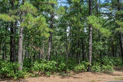 Pine Forrest LS