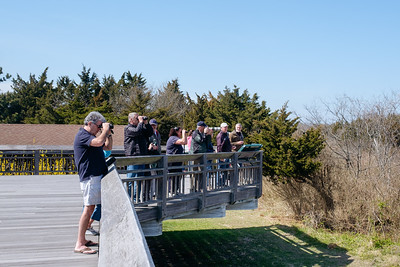 Bird Watchers In Cape May Point State Park