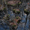 Great Swamp, NJ - Nov 2009