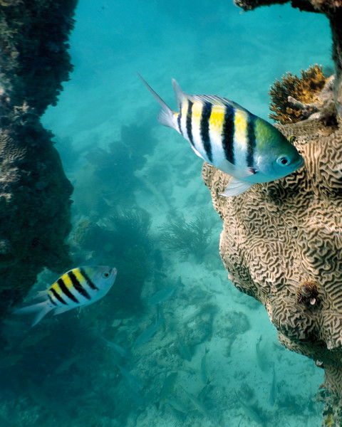 """In a New Light: Dry Tortugas - Johnny, 17 - """"Stripes"""""""