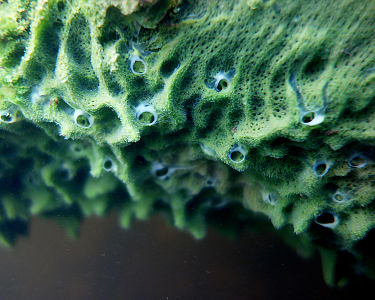 "In a New light: Under the Surface - Jonathan, 17 - ""Portrait of a Freshwater Sponge"""