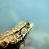 "In a New Light: Under the Surface - Reid, 15 - ""Swimming with a Leopard Frog"""