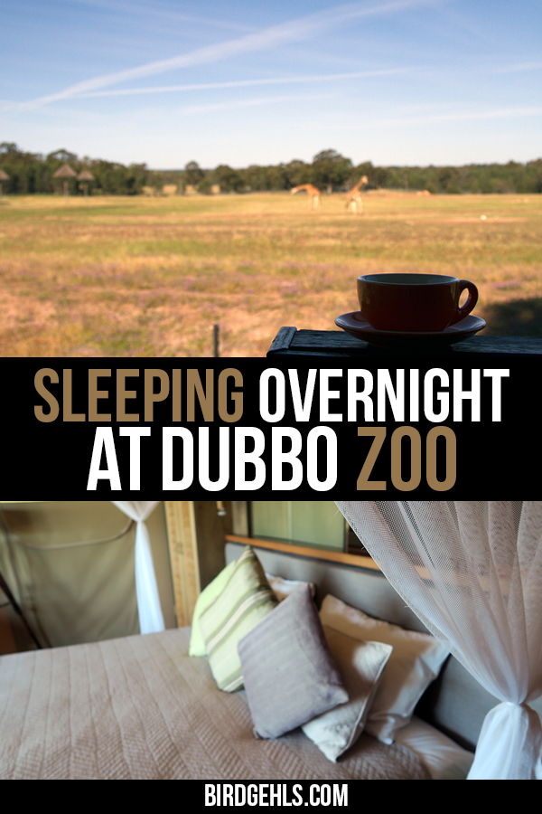 Glamping at a zoo?! You can do just that at Taronga Western Plains Zoo in #Dubbo, #Australia. Stay in a Zoofari Cabin and wake up to a chorus of birds and herds of African animals (and some Australian ones too) right outside your door. / Unusual things to do in NSW / #NewSouthWales /