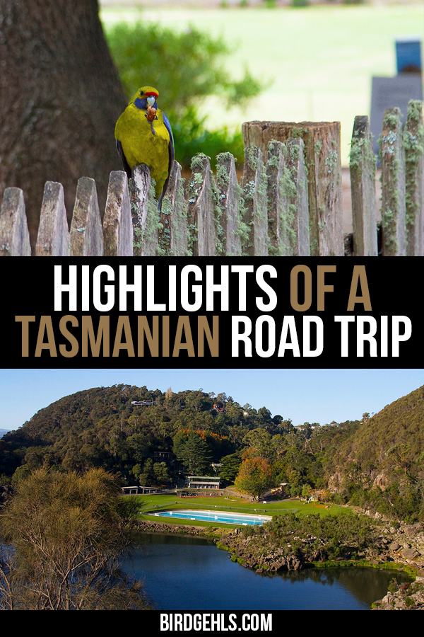 #Australia is country built for road trips and there's nothing as delightful as taking a road trip in #Tasmania. There's beautiful scenery, gourmet food, plenty of wildlife and quirky attractions to be found everywhere on the island state. Here are a few reasons why you should consider road tripping Tasmania, along with some suggestions of what to see and do along the way. / Australia Travel Tips / Tasmania Travel Tips / Road Trips Australia / #RoadTrips / #SeeAustralia /