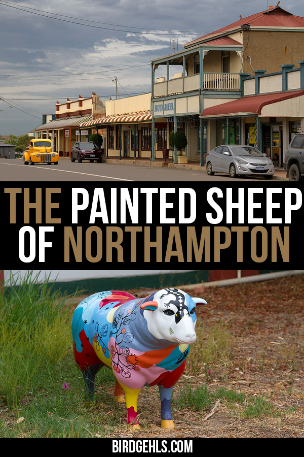 Five hours from Perth in Western Australia, is a small town crammed full with painted, fibre glass sheep. Ewe you find out about Northampton WA and its fancy painted sheep here. / Things to see in #Australia / #WesternAustralia / #WA / #OneDayinWA /