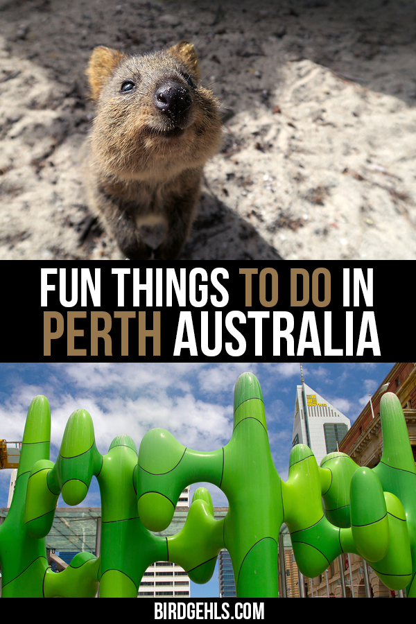 Here are some suggestions of things to do in #Perth, the capital of Western Australia. Great food, beaches, plenty of outdoor activities, art, culture, markets and fabulous areas to day trip to are just some of the options that await you / #WA / #OneDayinWA / #PerthisOkay / #WesternAustralia / Things to do in Western Australia /