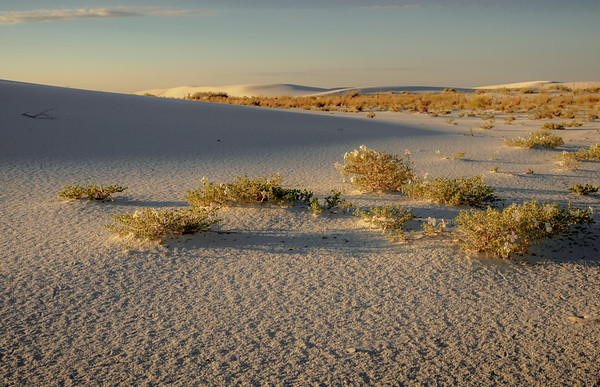 Morning at White Sands