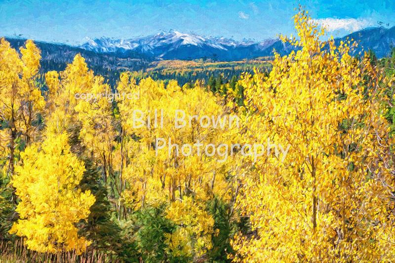 Aspen Glowing in Fall