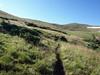 Cattle grazing in La Cal Basin.