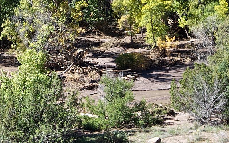 DSC_1004 Debris beside the stream