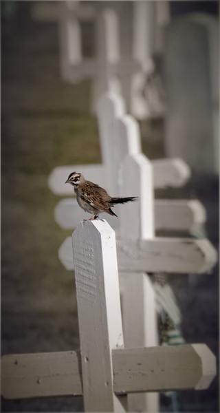 Bird on cross-1