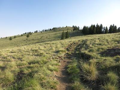 Cibola County, Mt. Taylor - Jun. 25, 2017