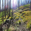 Although the area was extensively burned, the trail was in good shape with little deadfall.