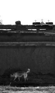 Dog at Pueblo Rez