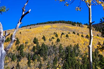 Aspen Vista Hike_101120-023
