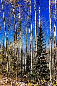 Aspen Vista Hike_101120-007
