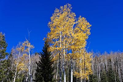 Aspen Vista Hike_101120-014