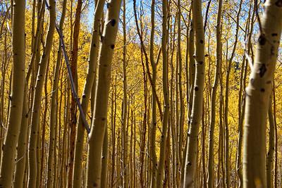 Aspen Vista Hike_101120-009