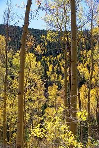Aspen Vista Hike_101120-020