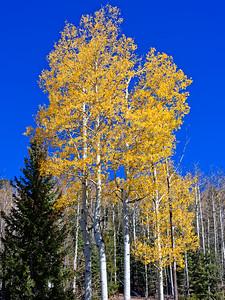 Aspen Vista Hike_101120-015