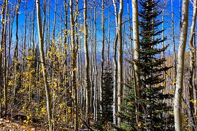 Aspen Vista Hike_101120-006
