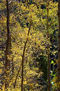 Aspen Vista Hike_101120-021