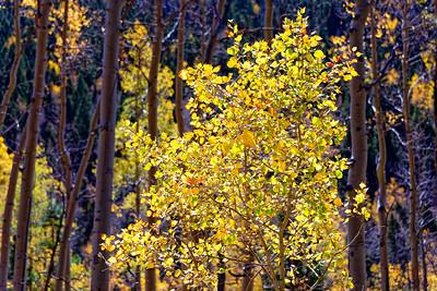 Aspen Vista Hike_101120-016
